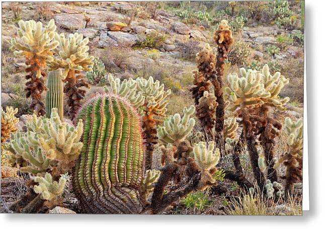 Usa, Arizona, Tucson Greeting Card by Jaynes Gallery