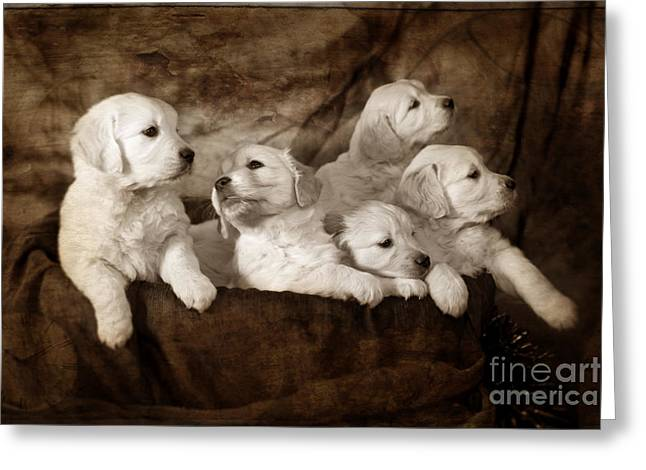 Dog Photographs Greeting Cards - Vintage festive puppies Greeting Card by Angel  Tarantella