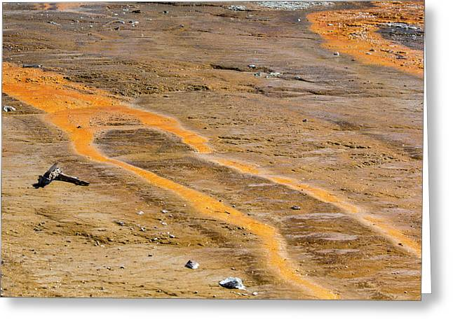 Yellowstone National Park Greeting Card by Jim West