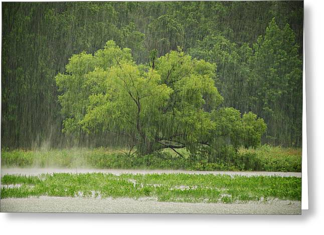 1307-4983 Rainy Lake Ludwig Greeting Card by Randy Forrester