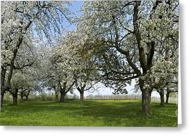 Limburg Greeting Cards - 130901p216 Greeting Card by Arterra Picture Library
