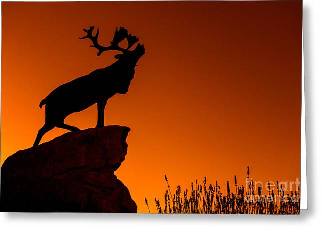 Hamels Photographs Greeting Cards - 130918p141 Greeting Card by Arterra Picture Library