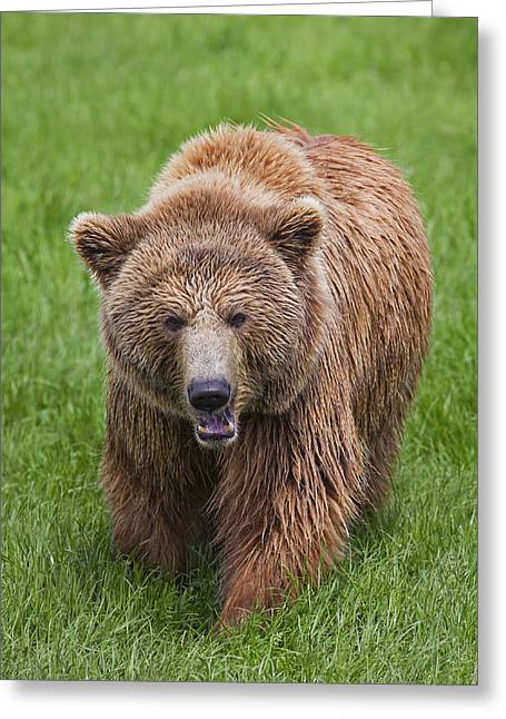 Growling Greeting Cards - 131018p214 Greeting Card by Arterra Picture Library