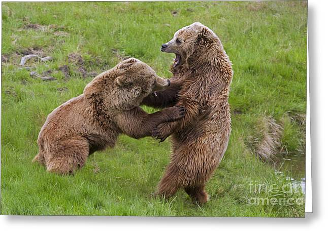 Growling Greeting Cards - 131018p263 Greeting Card by Arterra Picture Library