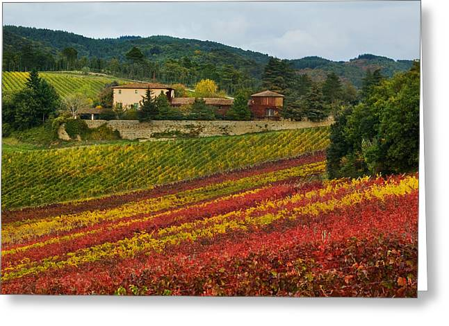 Chianti Greeting Cards - 1399 Greeting Card by John Galbo