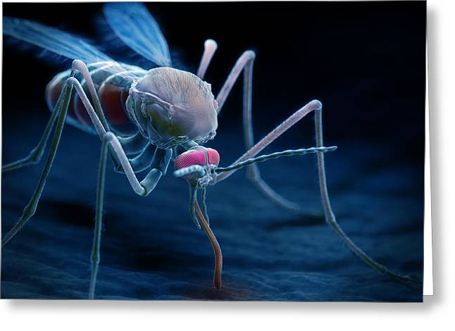 Vector Image Photographs Greeting Cards - Anopheles Mosquito Greeting Card by Science Picture Co