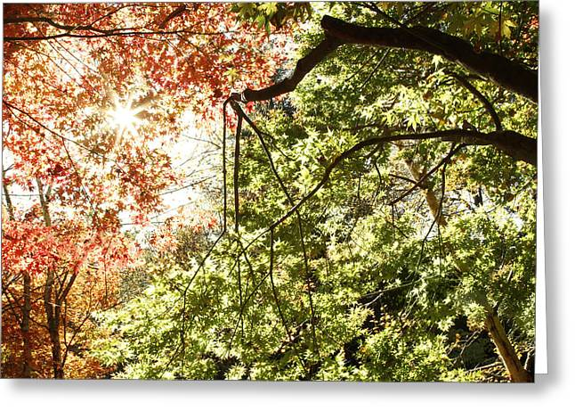 Autumn Photographs Greeting Cards - Autumn  Greeting Card by Les Cunliffe
