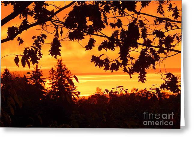 Annapolis Valley Greeting Cards - 14 Carat Gold Greeting Card by Karen Cook