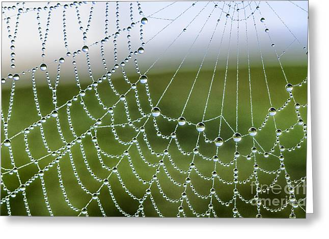 Spiderweb Greeting Cards - Dew on Spiderweb  Greeting Card by Thomas R Fletcher