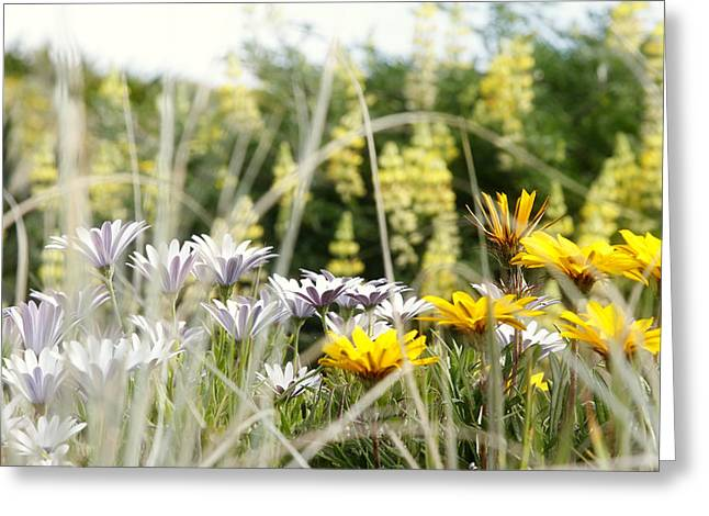 Flowers Photographs Greeting Cards - Flowers Greeting Card by Les Cunliffe