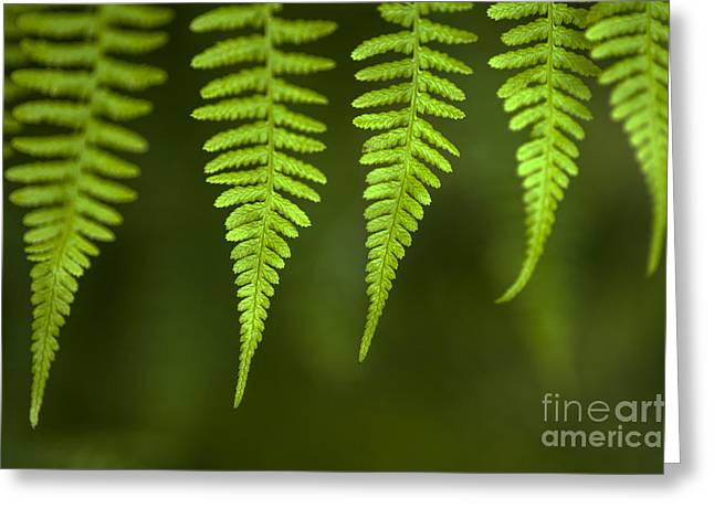 Close Focus Nature Scene Greeting Cards - Forest setting with close-ups of ferns Greeting Card by Jim Corwin