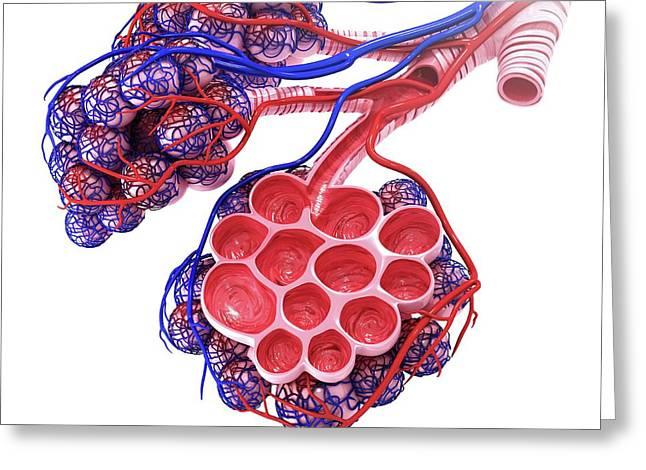 Human Alveoli Greeting Card by Pixologicstudio