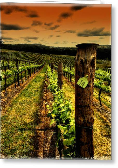 Viticulture Digital Greeting Cards - 14 Greeting Card by John Monteath