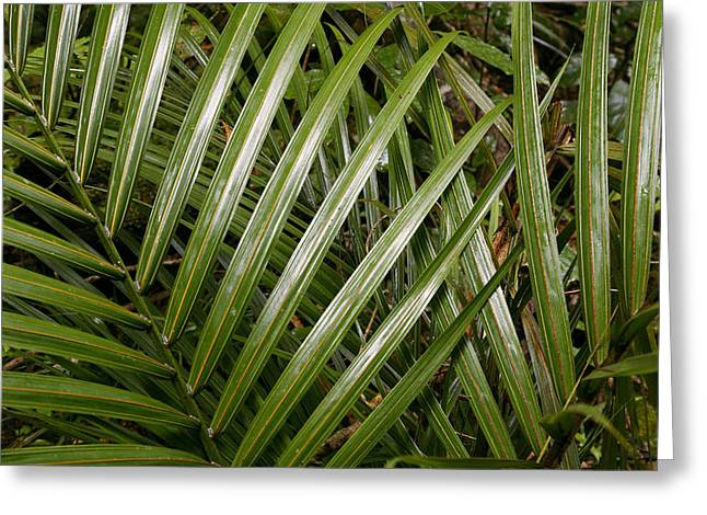 Tropical Photographs Photographs Greeting Cards - Jungle leaves Greeting Card by Les Cunliffe