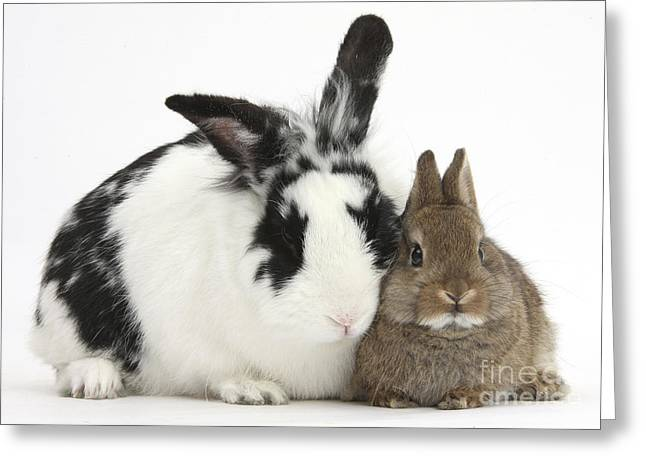 House Pet Greeting Cards - Rabbits Greeting Card by Mark Taylor