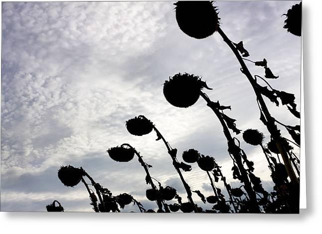 Outdoors Greeting Cards - Sunflowers Greeting Card by Bernard Jaubert