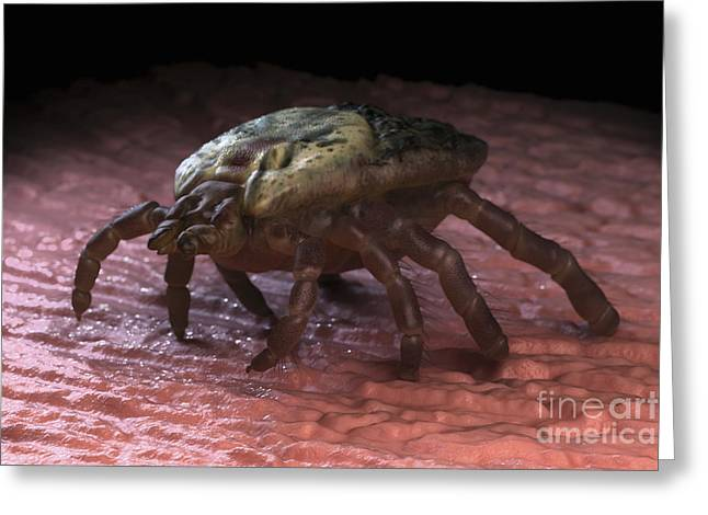 Parasites Greeting Cards - Tick Ixodes Greeting Card by Science Picture Co