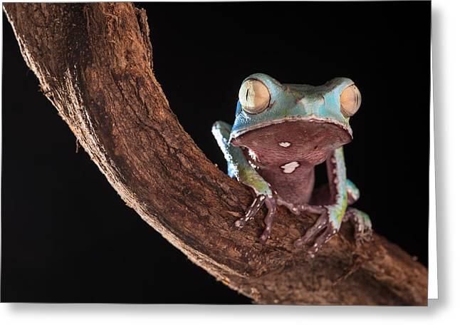 Morph Greeting Cards - Tree Frog Greeting Card by Dirk Ercken