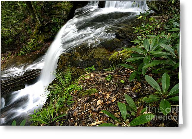 Rhododendron Maximum Greeting Cards - West Virginia Waterfall Greeting Card by Thomas R Fletcher