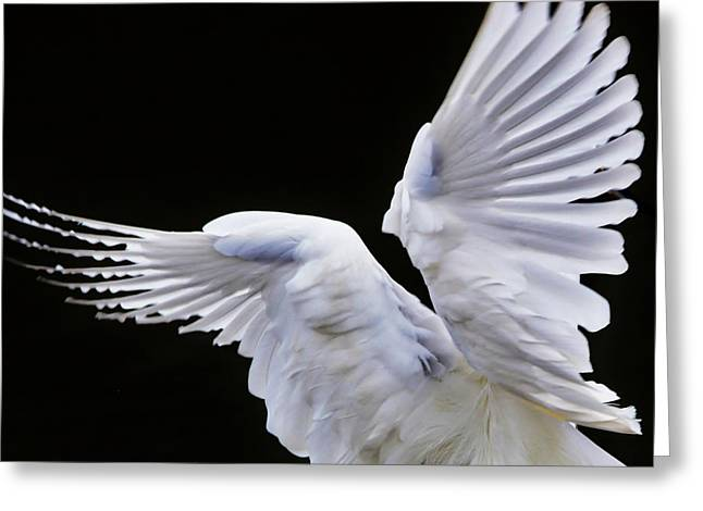 Wings Greeting Card by Paulette Thomas