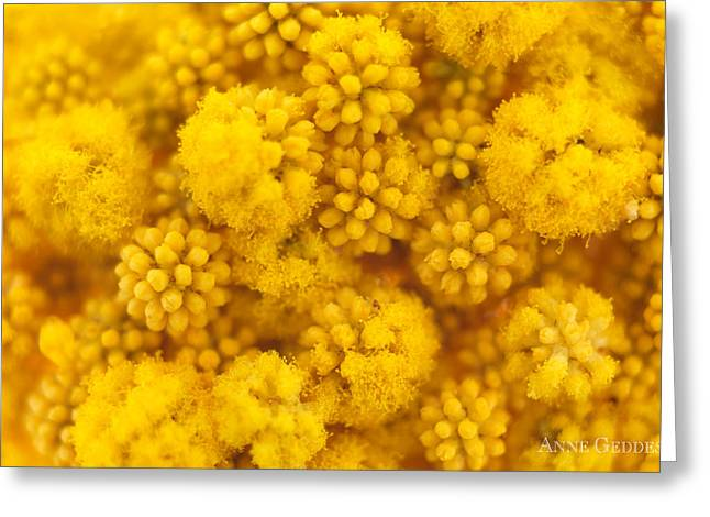 Color Yellow Greeting Cards - Untitled Greeting Card by Anne Geddes