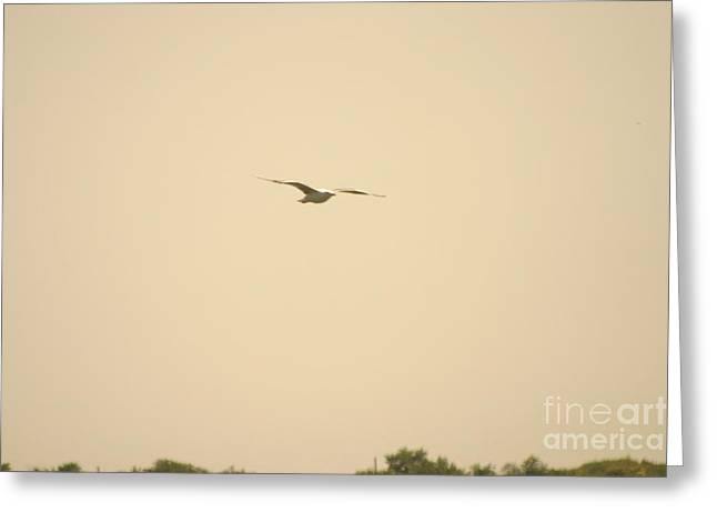 Caves Greeting Cards - Bird Greeting Card by Eric Brock