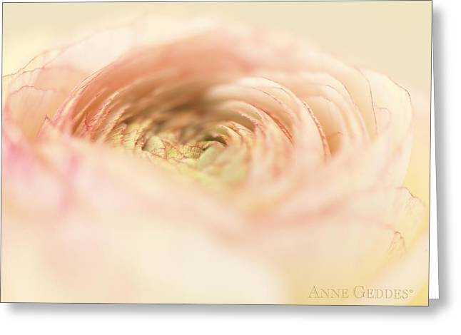 Cream Roses Greeting Cards - Untitled Greeting Card by Anne Geddes