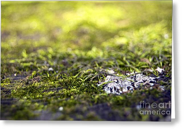 Moss Green Greeting Cards - 14549 Greeting Card by Jessica Smith