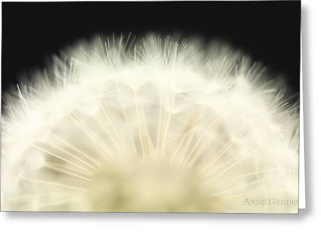 Flower Greeting Cards - Untitled Greeting Card by Anne Geddes