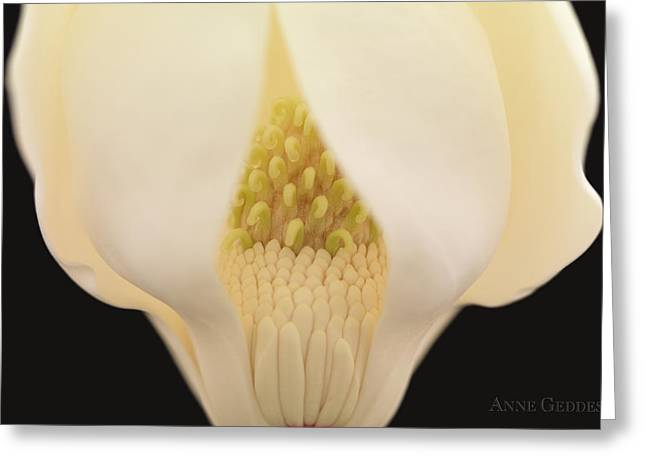 Bud Greeting Cards - Untitled Greeting Card by Anne Geddes