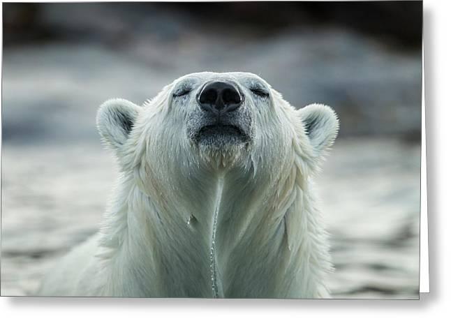 Canada, Nunavut Territory, Repulse Bay Greeting Card by Paul Souders
