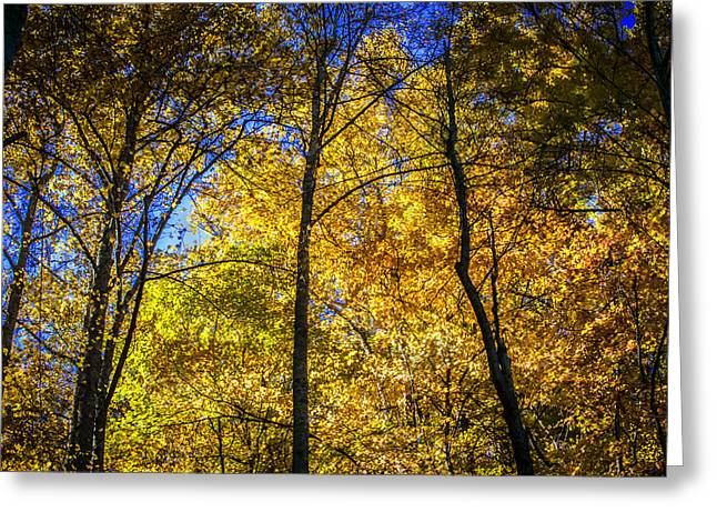 North Fork Greeting Cards - Fall Foliage Great Smoky Mountains Painted   Greeting Card by Rich Franco