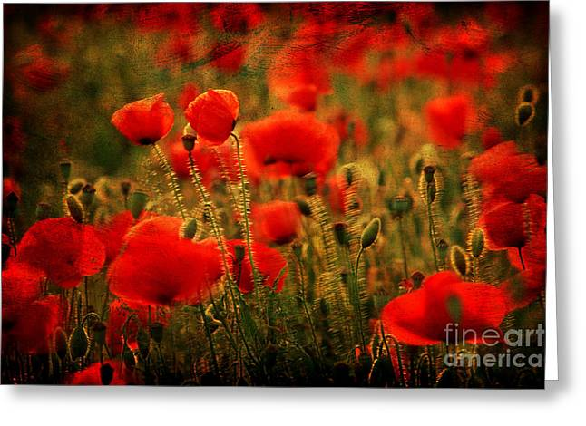 Botany Greeting Cards - Field of poppies  Greeting Card by Bernard Jaubert