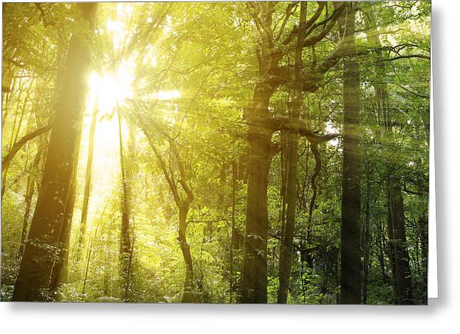 Woodland Scenes Greeting Cards - Forest light Greeting Card by Les Cunliffe