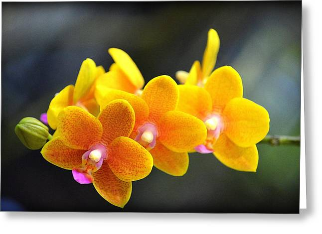 Orchid Show Greeting Cards - Huntington Library - Orchid Show Greeting Card by Stan Askew
