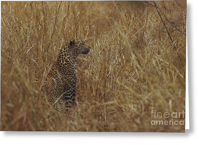 Sit-ins Greeting Cards - Leopard Greeting Card by Art Wolfe