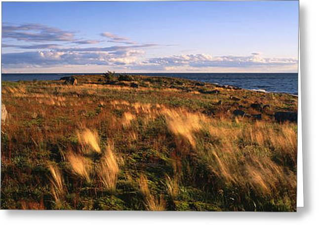 Grass Greeting Cards - National Park VALAAMSKY Greeting Card by Anonymous