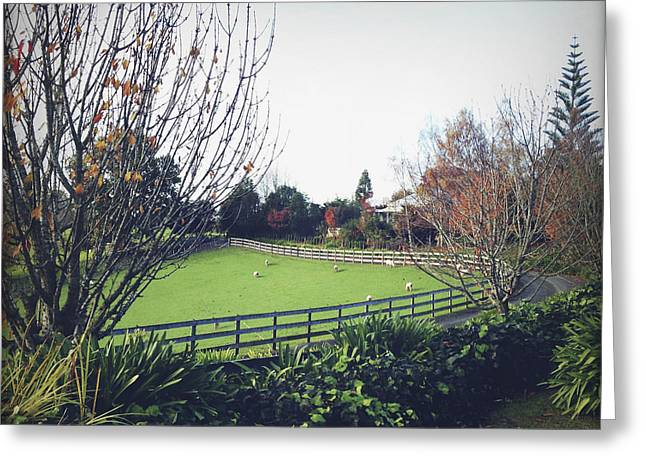 Ranch Photographs Greeting Cards - New Zealand Greeting Card by Les Cunliffe