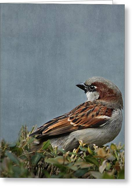 Sparrow Mixed Media Greeting Cards - Sparrow Greeting Card by Heike Hultsch