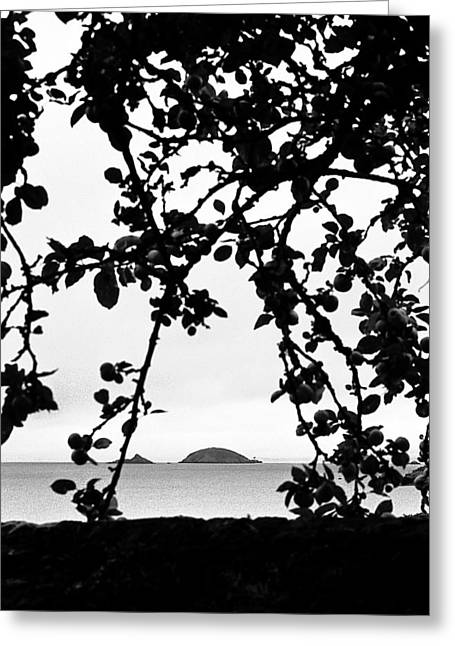 Silhouette Of Tree Greeting Cards - Untitled Greeting Card by Didier Gaillard