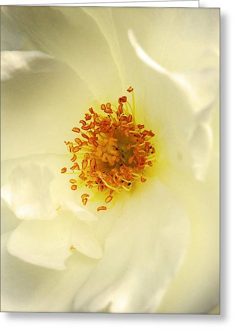 Rose Petals Greeting Cards - Flower  Greeting Card by Les Cunliffe