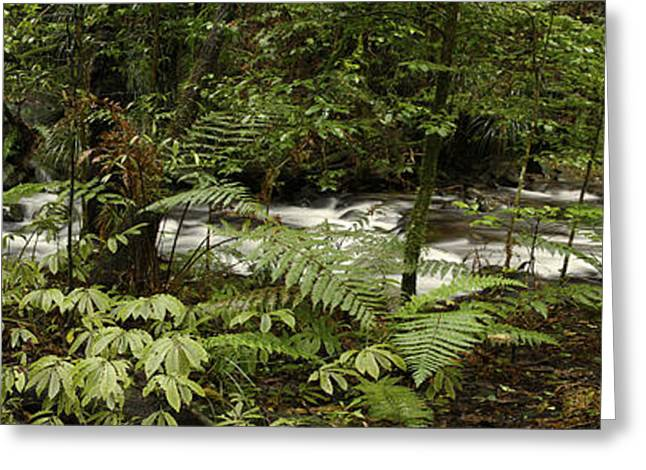 Raining Greeting Cards - Jungle stream Greeting Card by Les Cunliffe
