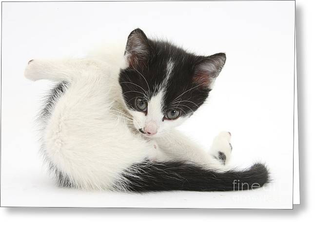 House Pet Greeting Cards - Kitten Greeting Card by Mark Taylor