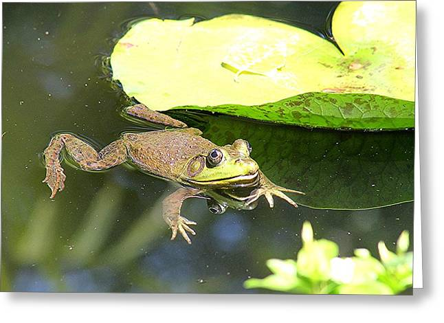 Lilly Pad Greeting Cards - Untitled Greeting Card by Henry Blackmon