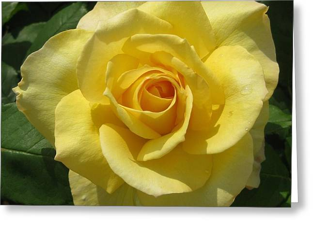 Garden Art Tapestries - Textiles Greeting Cards - Roses Greeting Card by Genevieve  Bascetta