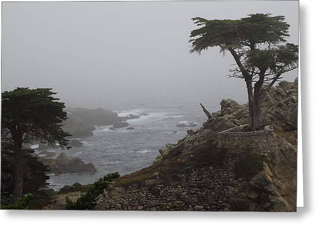 17 Mile Drive Cypress Tree Greeting Card by Linda Aiassa