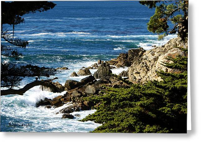 Scenic Drive Digital Greeting Cards - 17 Mile Drive Detail Greeting Card by Barbara Snyder