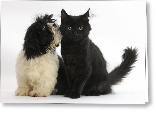 Mixed Species Greeting Cards - Puppy And Kitten Greeting Card by Mark Taylor