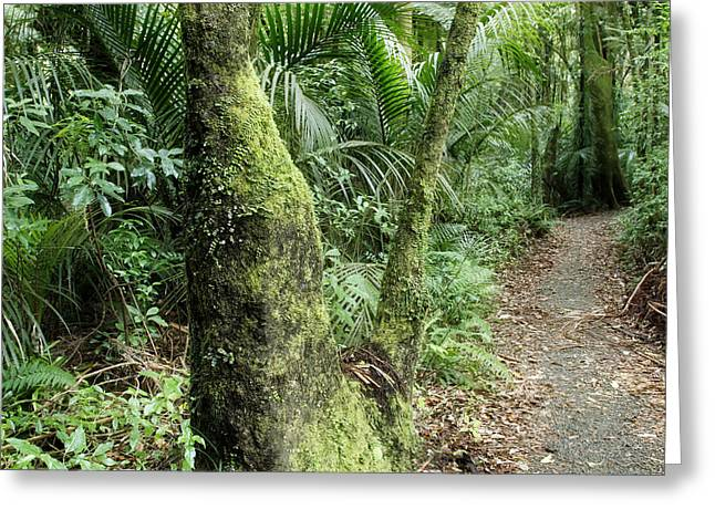 Forest Photographs Greeting Cards - Tropical forest Greeting Card by Les Cunliffe