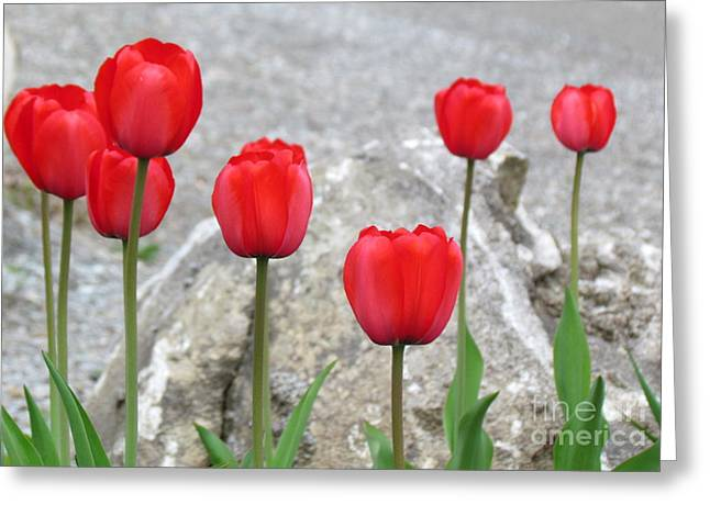 Vintage Greeting Cards - Tulips Greeting Card by France Laliberte
